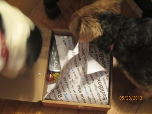Dogs discovering the contents