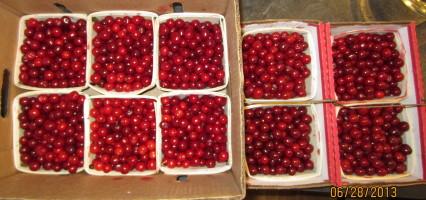 10 quarts sour red cherries
