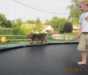 Derby walking the rim of the trampoline on the outside of the netting.  Crazy dog!